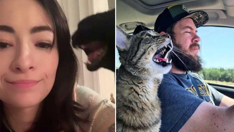 Fotos de gatinhos gritando