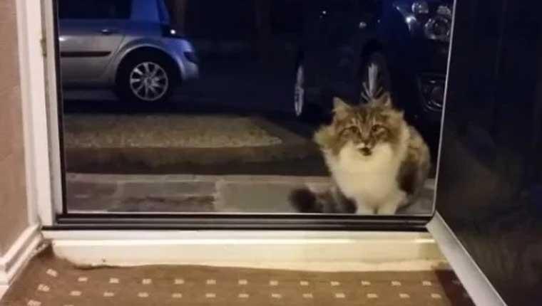 Gata de rua implora para entrar em uma casa e o motivo é emocionante