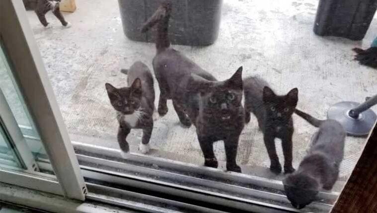 Gata-de-rua-levou-seus-filhotes