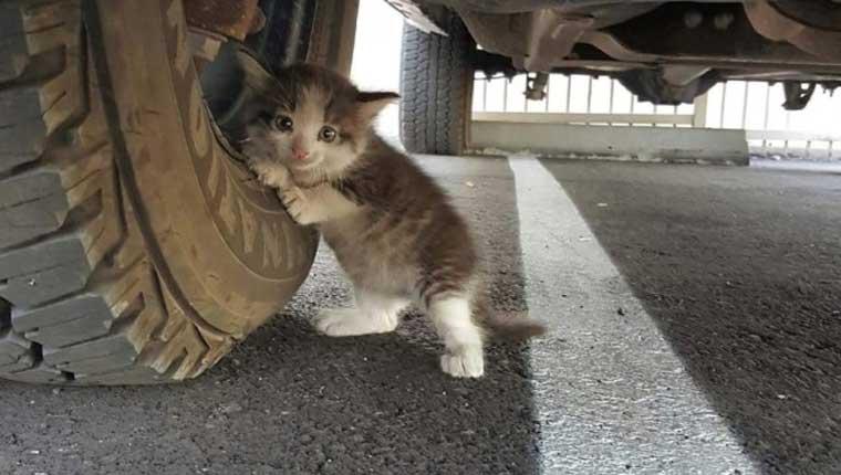 Detalhe viraliza em foto de gatinha fofa aterrorizada debaixo de caminhão