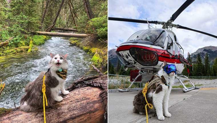 Gatinho resgatado se envolve nas aventuras mais fofas – fotos incríveis