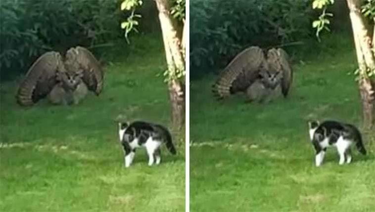 Gatinho se deparou com coruja enorme