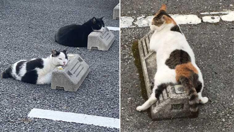 Gatinhos-usam-para-choques-de-estacionamento-como-travesseiros