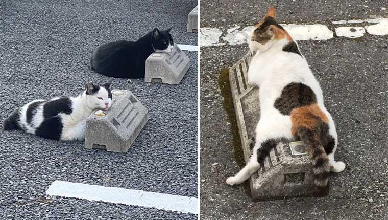 Gatinhos usam para-choques de estacionamento como travesseiros