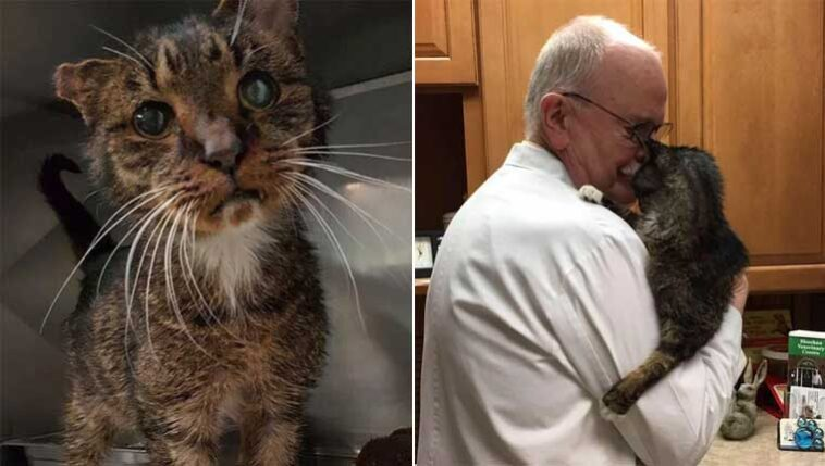 gato de rua idoso é abraçado pela primeira vez