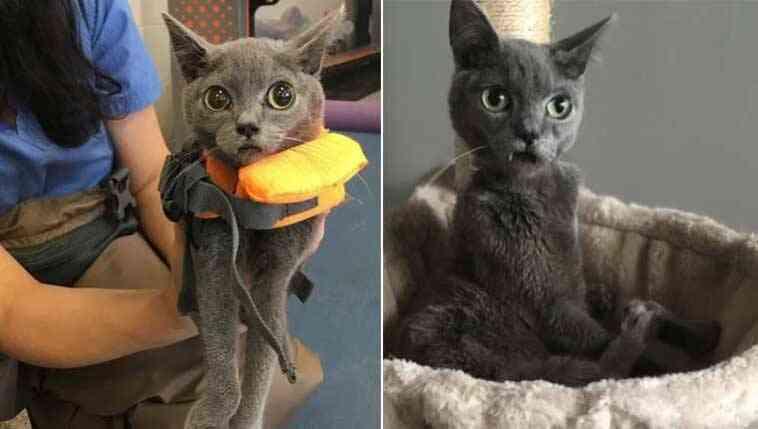 Gato deficiente tem presas fofas e parece um vampiro