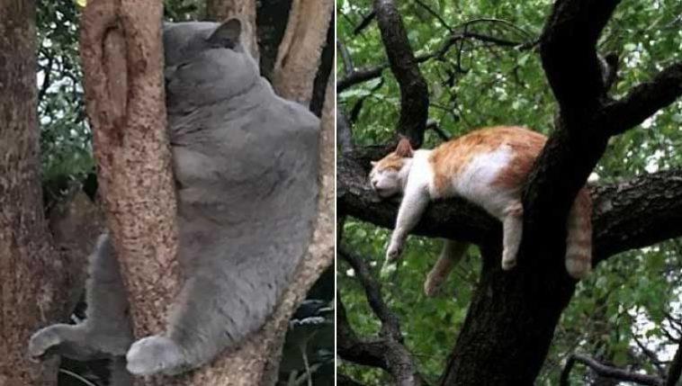 Gatos dormindo em árvores: 15 fotos hilárias