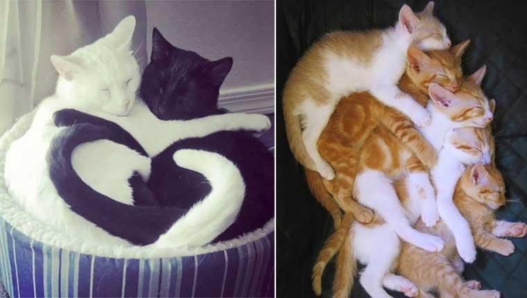 Gatos flagrados dormindo juntos nas posições mais fofas – 30 fotos