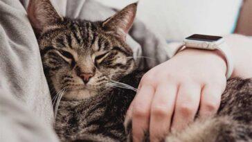 Gatos podem prever a morte dos donos
