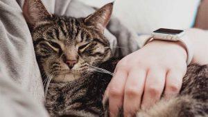 Gatos podem prever a morte dos donos? Cientistas respondem essa questão