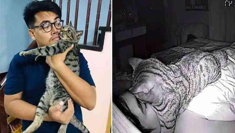 Homem descobre que acorda com falta de ar por causa de gato folgado