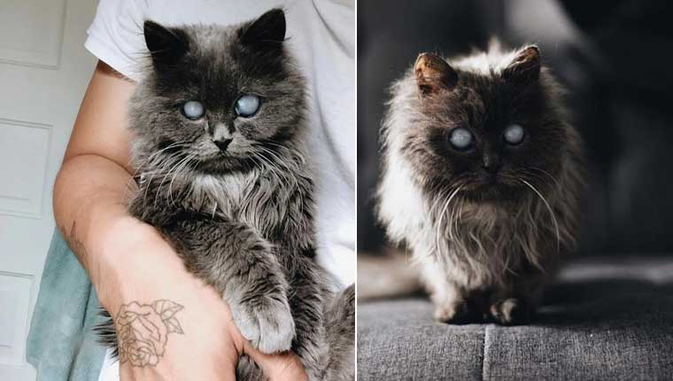 Linda gatinha cega conquista corações em abrigo e ganha um lar