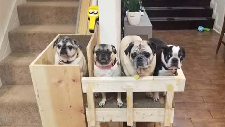 elevador para cachorros