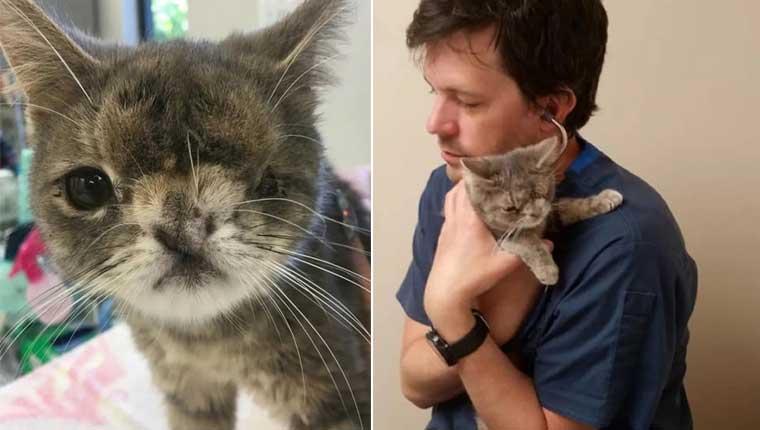 Gatinha de um olho só é viciada em abraços e encanta veterinário