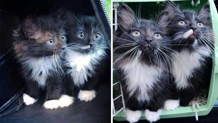 Gatinhos gêmeos inseparáveis procuram casa juntos