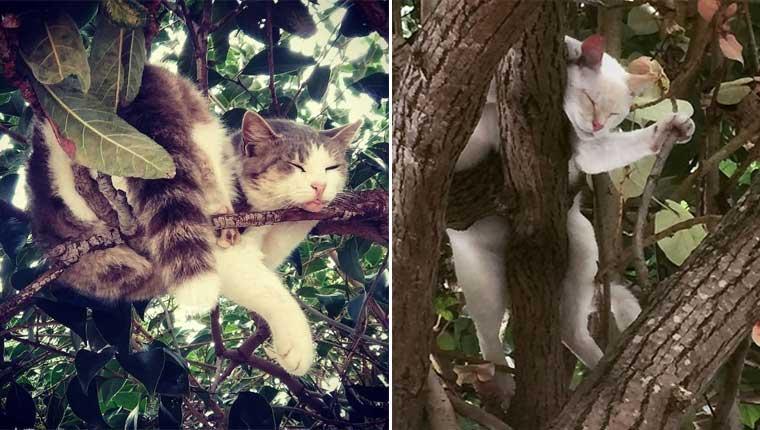 Essas fotos provam que gatos amam árvores