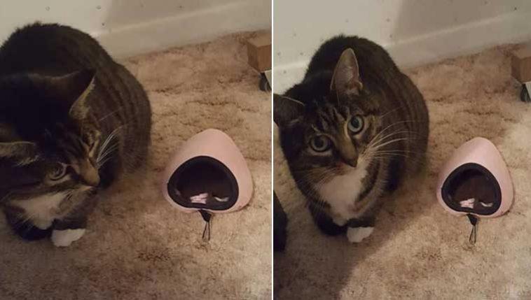 Cama-de-gato-minúscula