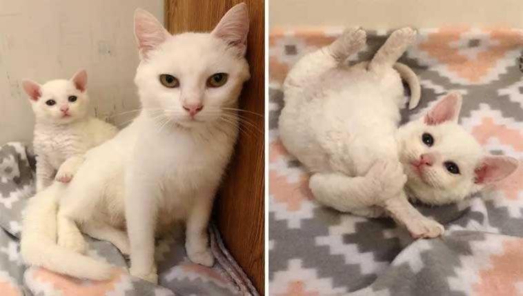 Família-descobriu-gata-de-rua