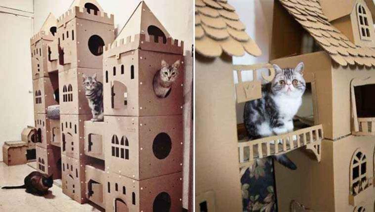 Fortes-de-papelão-para-gatinhos