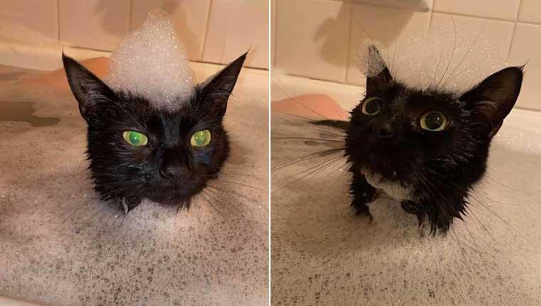 Gatinha apaixonada por banhos mostra que os bichanos não odeiam água
