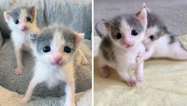 Gatinhos gêmeos órfãos têm vínculo especial e não podem ser separados