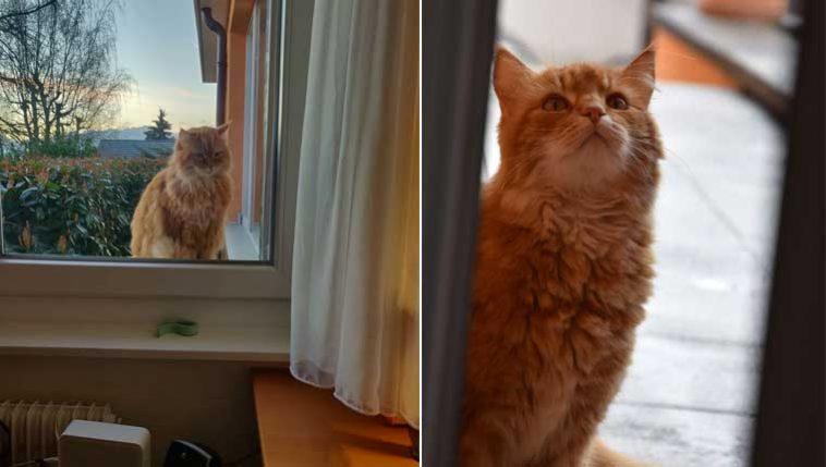 Gato-corre-para-dar-bom-dia-aos-vizinhos