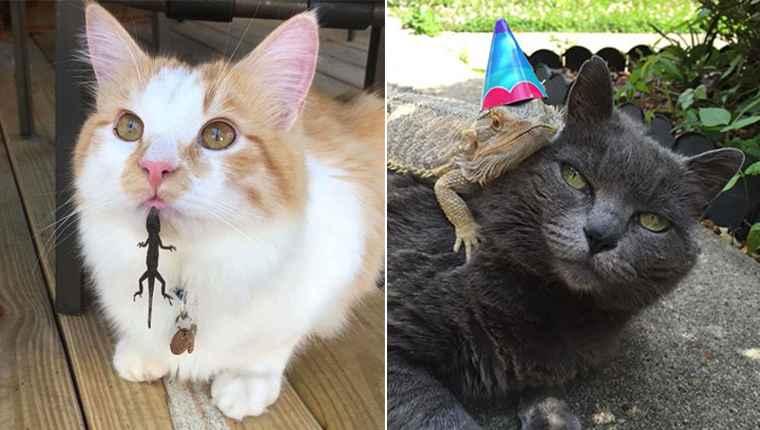 Gatos e lagartos têm uma relação de amor e ódio – confira nessas 20 fotos