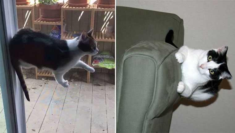 Gatos que desafiam as leis da física em fotos que vão bugar sua mente