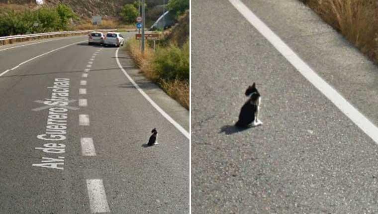 Google StreetViewflagra salvamento de gatinho em rodovia
