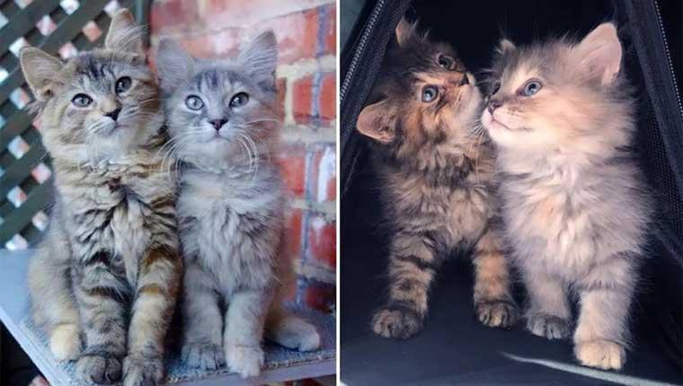 Irmãs gatinhas não se desgrudam e são resgatadas juntas
