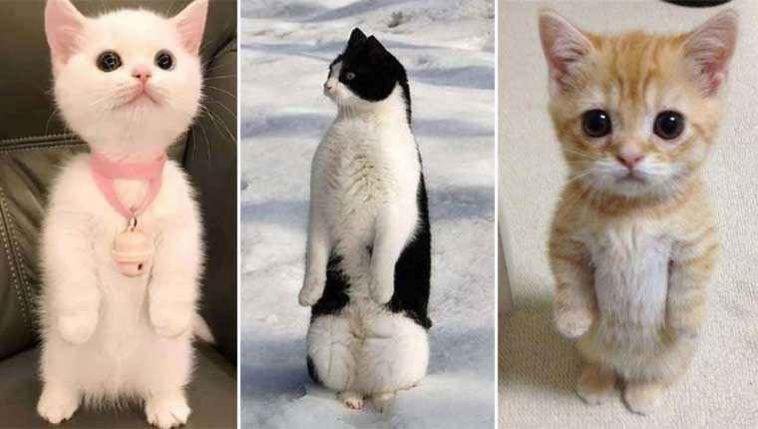 esses-gatinhos-acham-que-são-pinguins