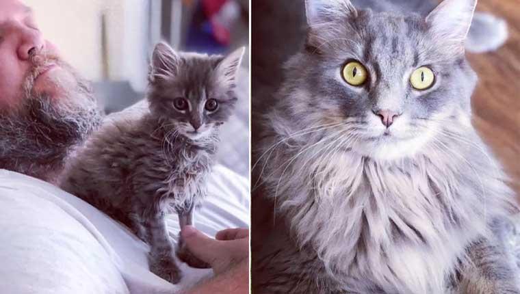 Gatinho é adotado após ser jogado de carro em movimento e perder uma pata