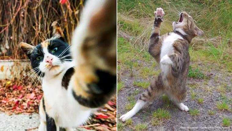Concurso premia fotos hilárias de pets: confira os gatinhos finalistas