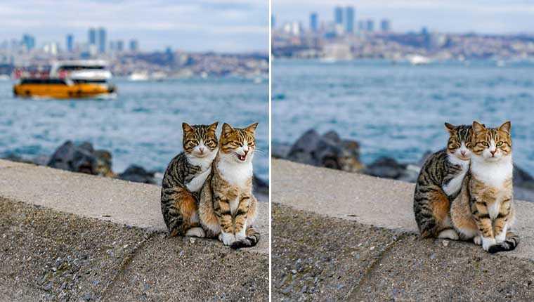 Fotógrafo flagrou gatinhos de rua se abraçando e registrou lindas imagens