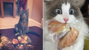Ria muito com esses 23 gatinhos flagrados roubando comida de gente
