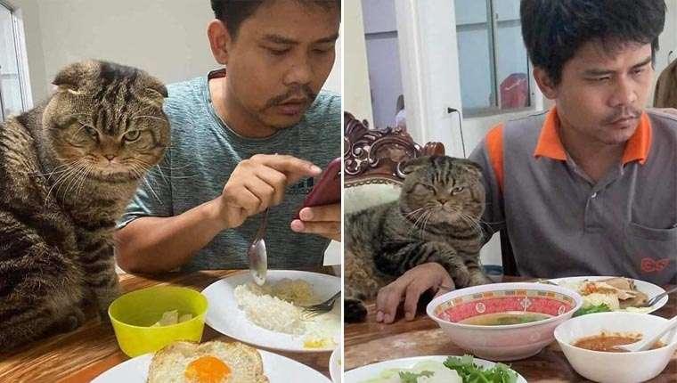 Mulher registra o gatinho roubando o marido dela aos poucos