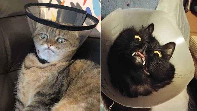 21 gatinhos com cone da vergonha que não estão sabendo lidar com eles