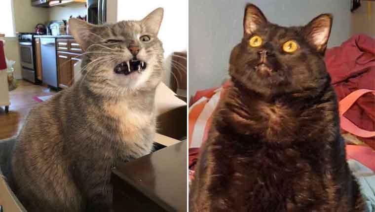 Os gatinhos menos fotogênicos do mundo vão te matar de rir