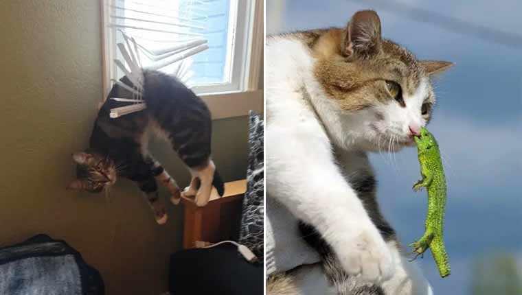 Os 20 gatinhos mais desastrados da internet em fotos para morrer de rir