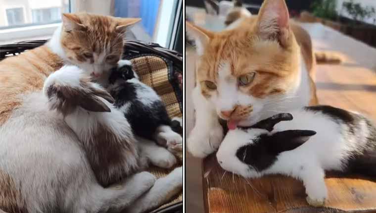 Gatinha se apaixona por coelhinhos em amizade encantadora