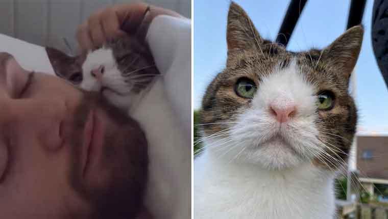 Homem adotou gatinho de abrigo que ninguém queria e valeu a pena