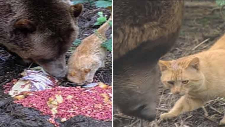 Amizade entre gatinho e urso gigante intriga e encanta