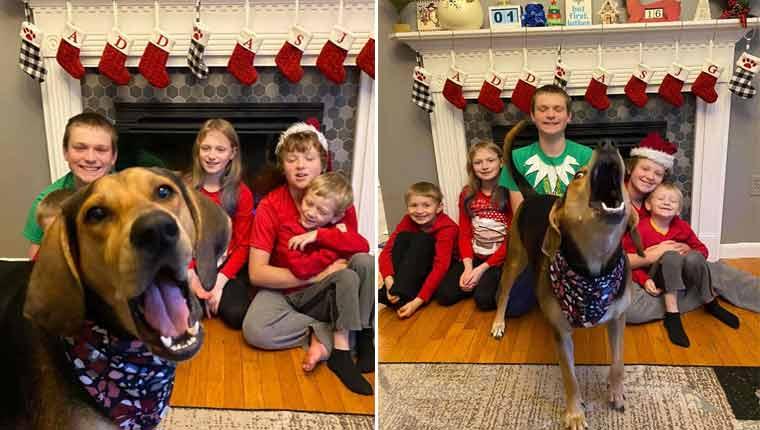 Cachorro estraga todas as fotos de Natal da família e resultado é hilário