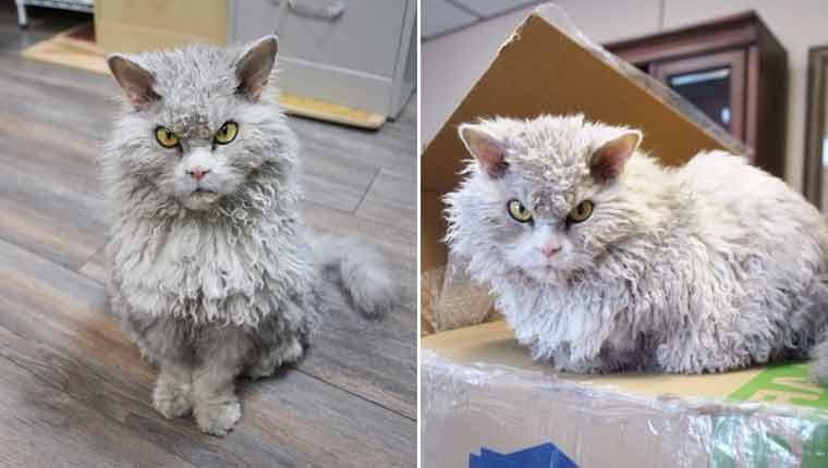 Esse gatinho parece uma pelúcia vivapermanentementeirritada