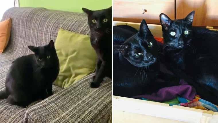 Família coloca a gatinha para dentro de casa e percebe que ela já estava lá