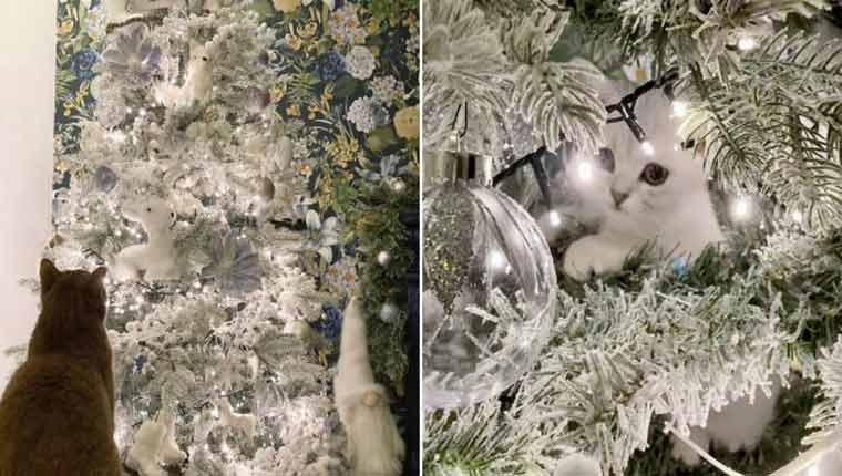 Gatinho camuflado em árvore de Natal é a coisa mais desafiante do dia