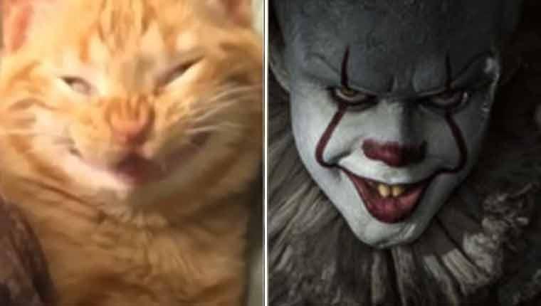 Gatinho ganha fãs por causa de sorriso hilário que lembra filme de terror