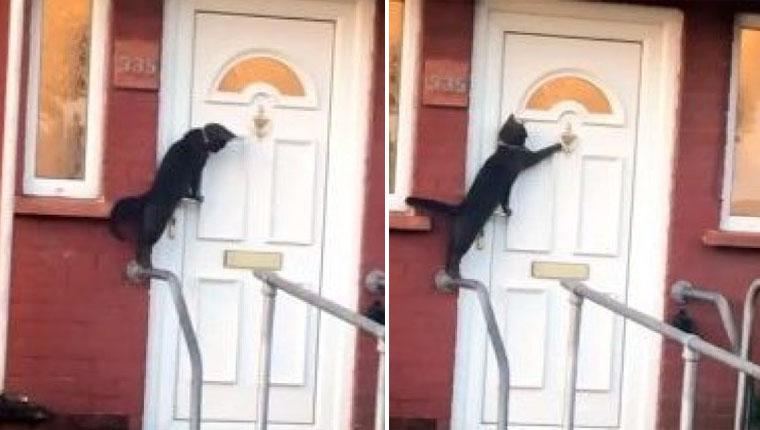 Gatinho mais educadoé flagrado batendo na porta de casa para entrar