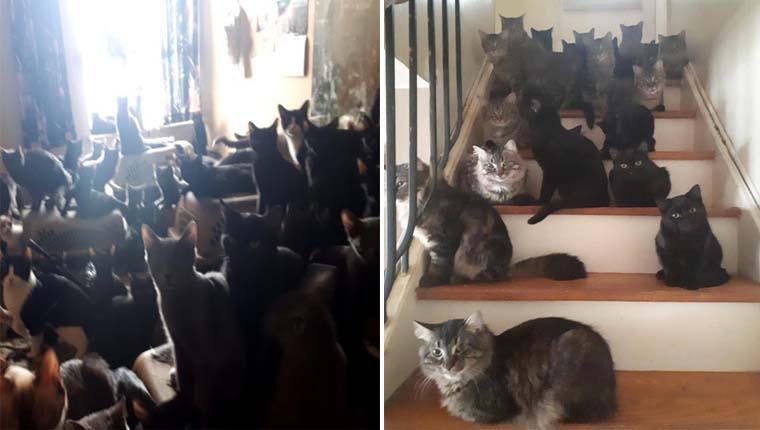 Mais de 300 gatinhos foram resgatados em apartamento minúsculo