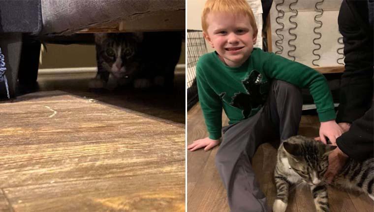 Mulher compra um sofá usado e ele vem com um gatinho escondido